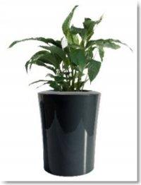pflanzgef garafia mini aus fiberglas in hochglanz designt f r innen und au en. Black Bedroom Furniture Sets. Home Design Ideas