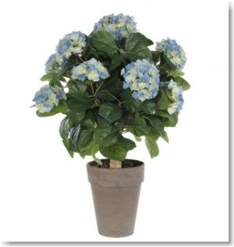 Hortensie Umpflanzen Im Topf : blaue hortensie im topf hergestellt aus kunststoff sehr pflegeleicht ~ Orissabook.com Haus und Dekorationen