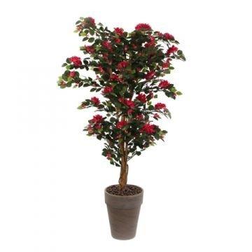 Bougainvillea Baum mit verschiedenfarbigen Blüten im Topf ...