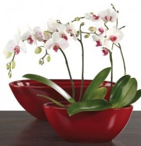 Blumenschalen rot Dark Red