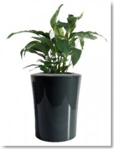 pflanzk bel fiberglas pflanztr ge aus fiberglas seite 2. Black Bedroom Furniture Sets. Home Design Ideas